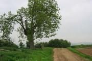 Sandhurst Hill