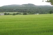 Barley, Easter Ardross