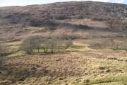 Birchwoods beneath Druim na h-Earba