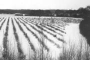 Bullockstone fields in winter