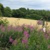 Flowery field margin at Mortonhall