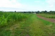 Farmland at Warham