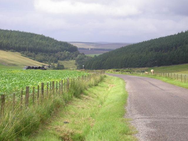 The Braes Road looking towards the Buiternach