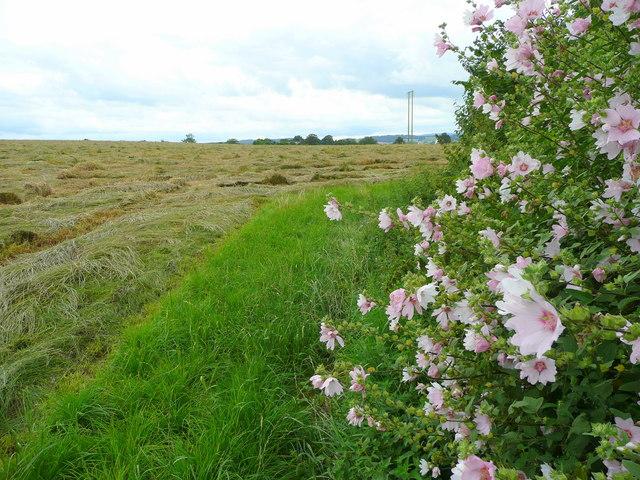 Edge of hay field