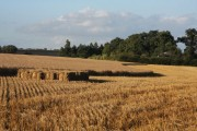 Partly harvested wheat field