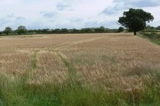 Farmland near Market Bosworth