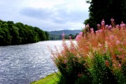 River Beauly,  looking upstream