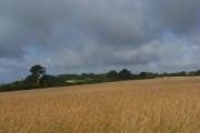 Farmland, Swyncombe