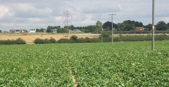 Field of beet and view to Henley