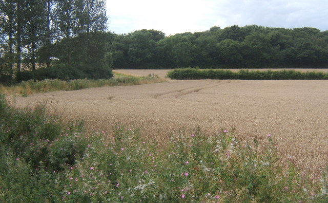 Looking across fields to Rede Wood