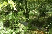 Camelford: river near Lanteglos