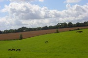 Horses grazing at Speen