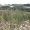 Overgrown field corner