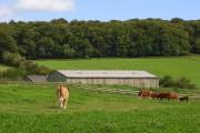 Pasture and barns, Upper North Dean