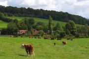 Pasture, Upper North Dean