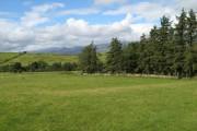 Woodland near Swch yr Hafod