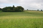 Stockern Plantation