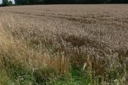 Farmland near Brockey Farm