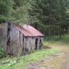 Derelict hut in woodland