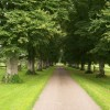 Cadhay House Tree Lined Drive