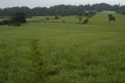 Bridlepath through farmland at Berries Head