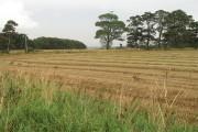 Sodden straw, Dalmeny Estate
