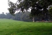 Sotterley Wood