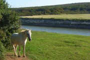 Pastures beside the Cuckmere River at Exceat