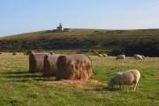 Pasture, East Dean