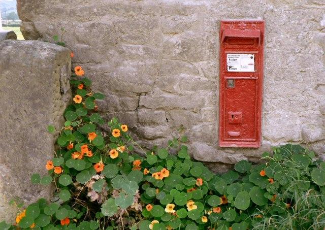 Ballidon's postbox with nasturtiums