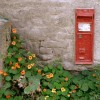 Ballidon's postbox with nasturtiums