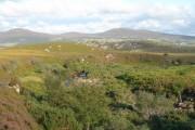 Native Woodland on the Achuvoldrach Burn