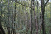 Woodland at Treskerby