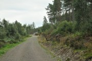 Forestry access road into Dounie Wood