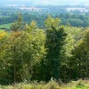Woodland south of Battlesbury Hill, near Warminster
