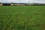 Farmland near Woofields Farm, Coddington