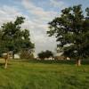 Orchard, Norbridge
