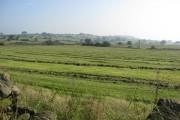 Freshly mown fields near Shottle
