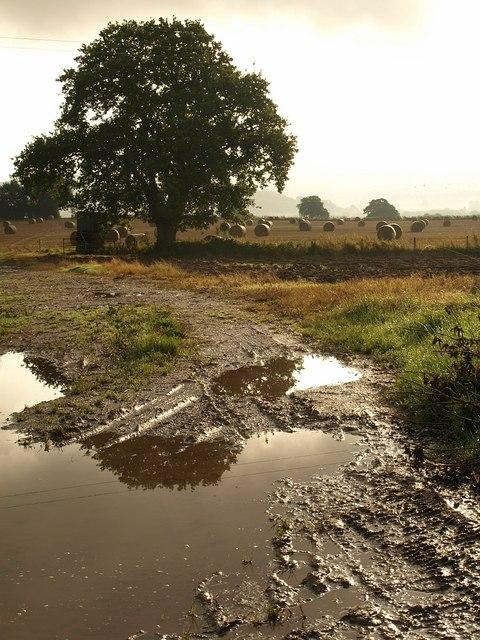 Tree and puddles, Mathon