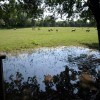 Flooded field near The Brays