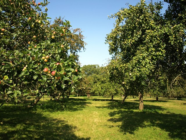 Orchard, Old Country Farm