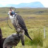 Falconer on the moor above Talmine.