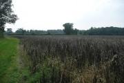 Farmland east of Sotterley