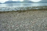 Pebble beach on Loch Linnhe