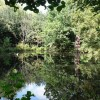 Bexley: pond at Danson Park