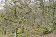 Coed Clawdd-coch