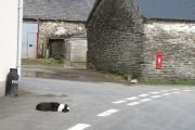 Road junction, Abergwesyn