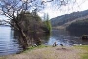 Lambs by Loch Avich
