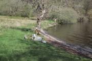 Side of Loch Avich