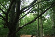 Eaves Wood